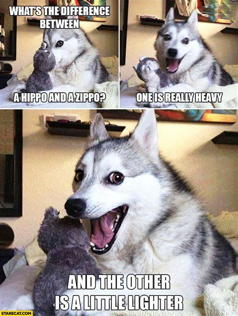 Funny dog: what's the difference between hippo and zippo