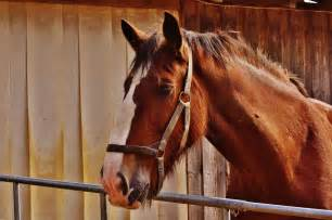 Horse riding lessons for children in Oxfordshire -- Little