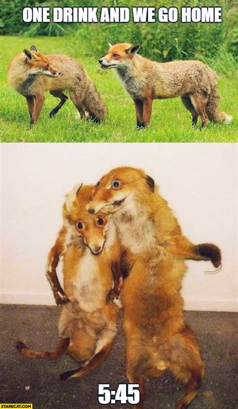 One drink and we go home foxes party hard | StareCat